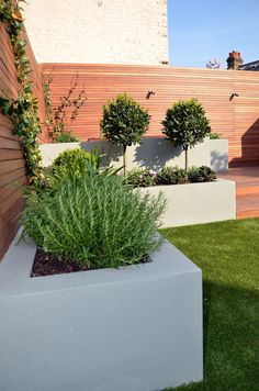 Modern garden design london natural sandstone paving patio for Low maintenance border shrubs
