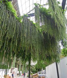 Vertical gardens: Patrick Blanc | ArchitectureAU
