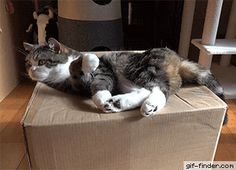Maru and Box | Gif Finder – Find and Share funny animated gifs