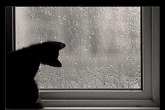 comme un jour de pluie