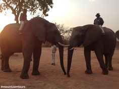 A ride on the back of an African elephant in the Kwamadwala Private Game Reserve is an opportunity of a lifetime. Try this opportunity with Mount Zion Tours and Travels. Private Games, Game Reserve, African Elephant, 4x4, Opportunity, Safari, Tours, Travel, Animals