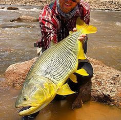 Fast water predator caught at Bolivia. #rivermonster #bigcatch
