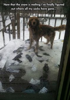 Now That The Snow Is Melting I've Finally Figured Out Where All My Socks Have Gone