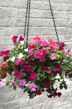 Beautiful Hanging Plants Ideas For Your Porch 21 Hanging Basket Stand, Christmas Hanging Baskets, Petunia Hanging Baskets, Plants For Hanging Baskets, Baskets On Wall, Impatiens Flowers, Planting Flowers, Petunias, Container Flowers