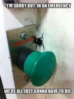 Spider eekk