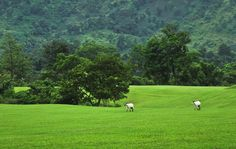 Namdang Golf Course, Margherita, Assam, India.  Photo: Sanat Dutta