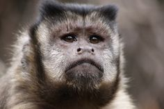 INTO THE WILD MEETS: DEREK KEATS, NATURE PHOTOGRAPHER | www.frontiergap.com | #photography #travel #wildlife #interview #Monkey #Animals