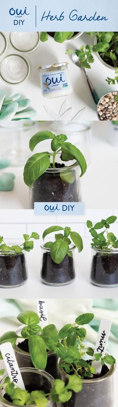 Indoor gardening with Oui by Yoplait glass pots couldn't be easier! Clean a glass pot, fill with small rocks to help with drainage, fill with potting soil and plant of choice. Herb Garden, Vegetable Garden, Garden Plants, Indoor Plants, House Plants, Container Gardening, Gardening Tips, Indoor Gardening, L Eucalyptus