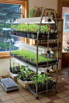 Starting Made Simple You could buy a handy seed-starting station — or, why not save big bucks and create something like this on your own?You could buy a handy seed-starting station — or, why not save big bucks and create something like this on your own? Greenhouse Plans, Greenhouse Gardening, Hydroponic Gardening, Simple Greenhouse, Outdoor Greenhouse, Gardening Books, Gardening Tips, Indoor Vegetable Gardening, Organic Gardening