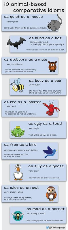 10 animal-based comparative idioms in English English Vocabulary Words, Learn English Words, English Language Learners, English Writing, English Grammar, Teaching English, English Tips, English Lessons, Esl Learning