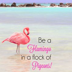 Be a Flamingo in a flock of Pigeons iPad Wallpaper Navy Wallpaper, Unique Wallpaper, Wallpaper Iphone Disney, Flamingo Wallpaper, Ipad Wallpaper Kate Spade, Funny Quotes Wallpaper, Funny Quotes About Life, Funny Life, New Ipad