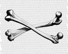 Crossed Human Femur Bones Anatomy Study by luminariumgraphics, $2.20