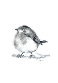 bird drawing charcoal drawings pencil nature hand drawn birds draw sketch animal illustration easy nursery hands sold
