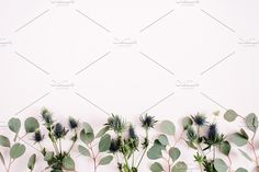 Eucalyptus on pink background Photos Beautiful eucalyptus branches and eringium flowers on pale pastel pink background. Flat lay, top vie by Floral Deco