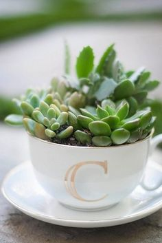 Cute planter idea