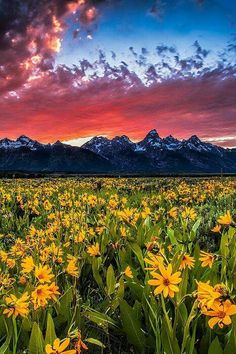 Grand Tenton National Park, Wyoming