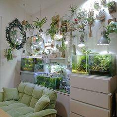 #botanical #plants #aquarium. Living room.
