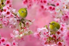 Love Song by Sue Hsu on 500px