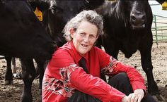 Temple Grandin will host autism seminar in Great Falls - KRTV.com | Great Falls, Montana http://www.krtv.com/story/33033089/temple-grandin-will-host-autism-seminar-in-great-falls