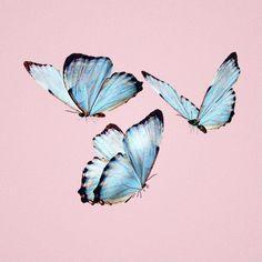 ✧・゚: *biscitu✧・゚:* butterfly aesthetic Log in Butterfly Watercolor, Blue Butterfly, Butterfly Drawing, Aesthetic Drawing, Pink Aesthetic, Aesthetic Painting, Aesthetic Tattoo, Aesthetic Collage, Aesthetic Photo