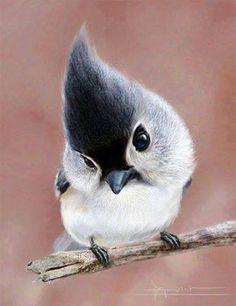 Я синичка маленькой певчей птицей из Северной Америки