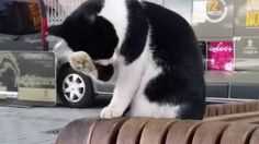 Very sweet cat Funny Animals, Cats, Sweet, Youtube, Candy, Gatos, Funny Animal, Hilarious Animals, Cat