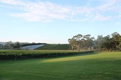 Vines in the Adelaide Hills