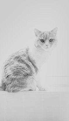Animals Wallpapers iPhone : Animals wallpaper iPhone cats
