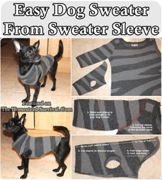 A quick and easy step by step tutorial of how to make a small dog sweater from an old sweater sleeve do it yourself project. It also explains the concept o - A quick and easy step by step tutorial of how to make a small dog sweater from a. Small Dog Sweaters, Small Dog Clothes, Pet Clothes, Dog Clothing, Dog Sweater Pattern, Dog Pattern, Diy Pour Chien, Alter Pullover, Dog Clothes Patterns