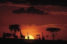 Masi Mara, Kenya - Surreal. Especially the helicopter ride over the Masi Mara before the other Safaris was incredible!