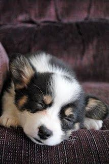 Twins move out of the house, quickly replaced by Corgi puppy