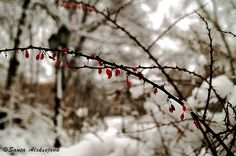 Winter photography   Fine Art Photography  8x12 by BlossomingDream #photography #winter #Etsy