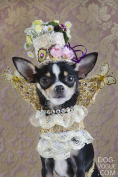 40afd28f4f48 Celebripup / Couture Dog Bogie Rubio modeles a creation by designer Anthony  Rubio for Strikingpaws.