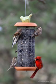 """the garden-roof coop: DIY Sunflower seeds Tower Bird-Feeder using 1/4"""" mesh hardware cloth and saucers - maybe use cute plates from thrift store?"""