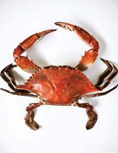 blue crab....very tasty. :)