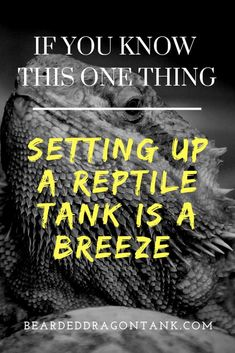 There is one thing you must know in order to make setting up a reptile tank way easier! Bearded Dragon Tank Setup, Bearded Dragon Lighting, Bearded Dragon Funny, Bearded Dragon Cage, Bearded Dragon Habitat, Bearded Dragon Substrate, Reptile Show, Reptile Pets, Dragon Facts