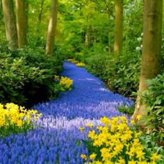 Path of flowers- soo pretty and relaxing.