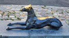 Orășelul Copiilor - Bucureşti Goats, Pitbulls, Animals, Animales, Animaux, Pit Bull, Animal, Animais, Pit Bull Terriers