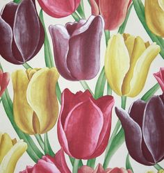 Early Tulips Wallpaper A fabulous wallpaper of large tulips in red, yellow and aubergine, taken from a 1929 fabric