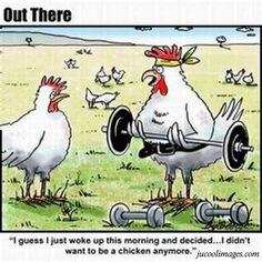 10 Best Chicken Jokes Images Funny Stuff Chicken Jokes Funny Chicken