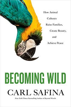 Buy Becoming Wild: How Animal Cultures Raise Families, Create Beauty, and Achieve Peace by Carl Safina and Read this Book on Kobo's Free Apps. Discover Kobo's Vast Collection of Ebooks and Audiobooks Today - Over 4 Million Titles! Book Club Books, Books To Read, Buy Books, Book Lists, Alphabet, Animal Society, Beyond Words, Natural World, Natural History