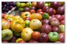 Brandywine Tomato, Best Planting Tomatoes, Growing Brandywine Heirloom Tomatoes, how to save seeds