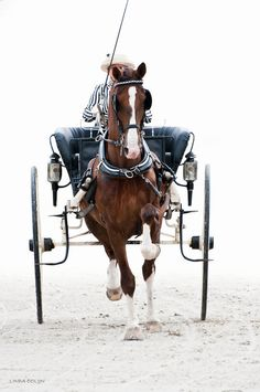 brings back memories of going to the track with my dad watching harness racing...so much fun but i prefer flat back racing...