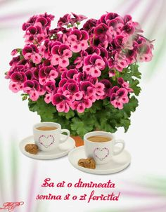 Good Night, Happy Birthday, Floral, Coffee, Folklore, Buen Dia, Nighty Night, Happy Brithday, Kaffee