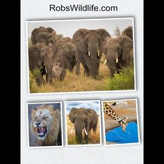 I am going to be starting my Journey to Africa soon  I would love to know what you want to see  what Images Videos Behind the Scenes stuff do you want.  http://ift.tt/1PSxMR6