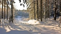 #111257, Cool winter forest image