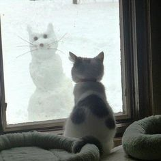 """"""" Yeah, the kitty snowman is cute...but not a lot of personality"""".    Cat Snowman. Lol! Funny Humor, Funny Cat, Snow Pictures, Snow Cat, Funny Stuff, Snowcat, New Friends, Animal, Baby Cat"""