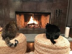 "#WellnessWednesday for #Pets. Our line of solutions was designed by a veterinarian and has helped pets for over 20 years. Here's a story from one happy customer, ""Lilly (10) and George (5) are loving the Easy Traveler and Safe Space spray! We recently bought a weekend home and the cats HATED the 2 hour drive (meowing the entire time). We felt so bad for them in the car, but kept taking them since they love the house once they make it there. Now, with the sprays they are much happier - only a…"