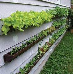 Container gardening using pieces of gutter attached to the siding of your house. Huh. Interesting idea. (From: http://www.treehugger.com/slideshows/green-food/container-gardening-options-for-growing-in-small-spaces/)