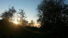 Il sole tra gli alberi